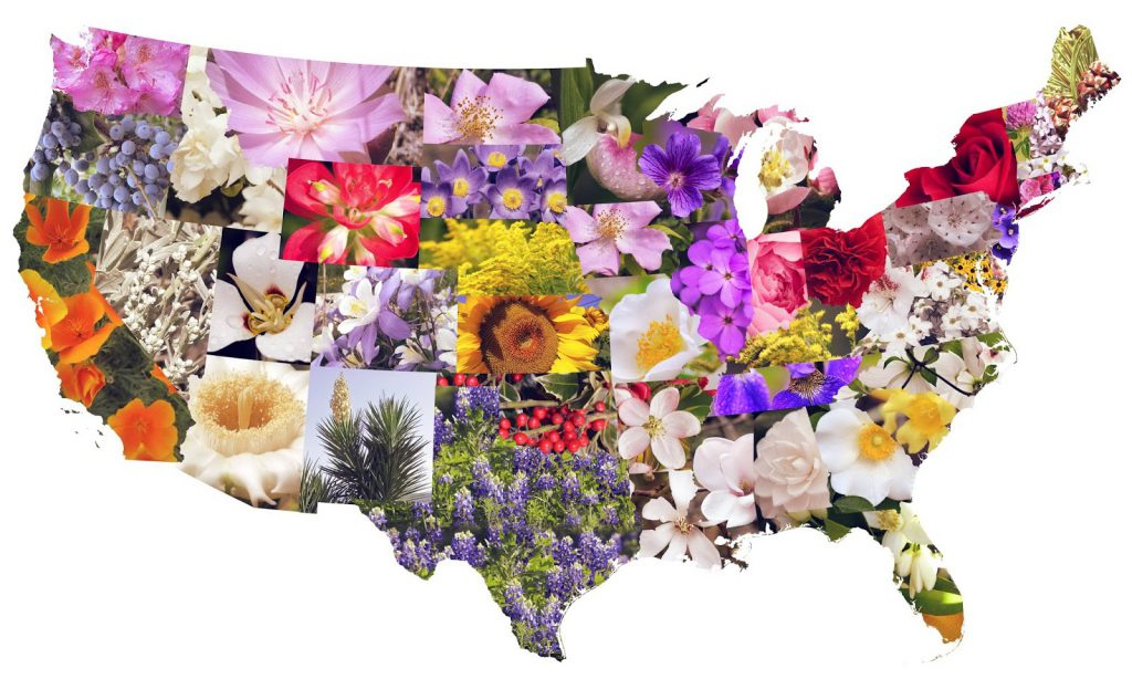 State flowers of the contiguous U.S.