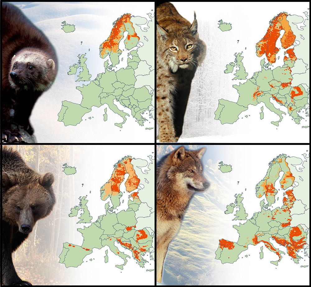 Carnivores of Europe