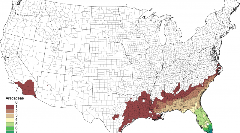 Palms in the United States