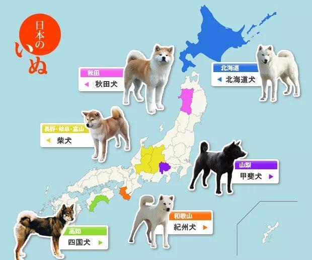 japanese dogs