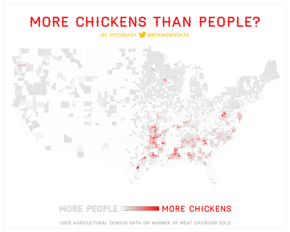 More chickens than people?