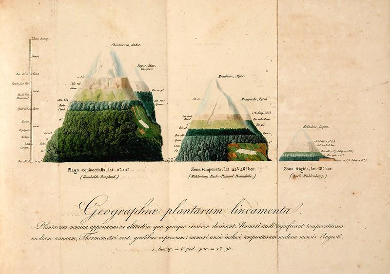 Astonishing Vintage Illustrations of Mountain Vegetation
