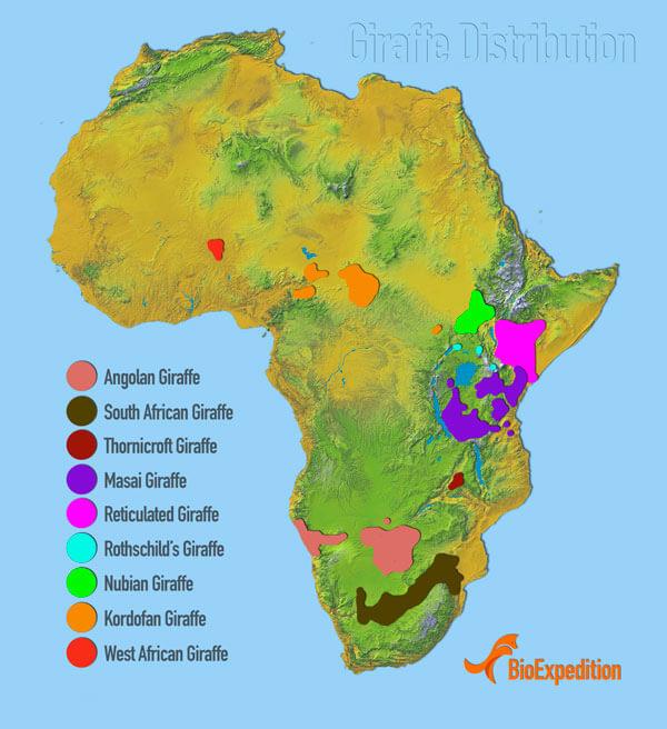 Географическая карта распространения различных подвидов жирафа.